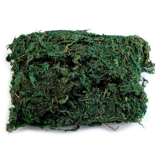Zöld moha
